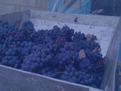 Купить дробилки с гребнеотделителем для винограда в Украине